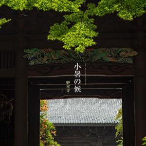 小暑の候【妙本寺】風が強い日が続きますが凌霄花は見事でした!