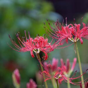 雨の週末【浄光明寺】霧雨の中で出会った花たち