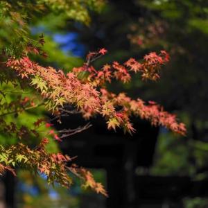 初秋の頃【山ノ内~扇ガ谷】円覚寺・東慶寺・浄智寺・海蔵寺で見た秋の光
