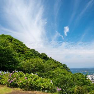四葩の頃【葉山・あじさい公園】空と海と紫陽花、と江の島