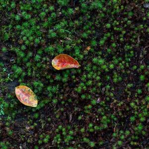 寒露の候【長寿寺】霧雨に鮮やかさを増す苔の緑