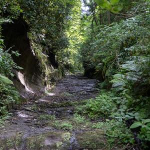 市境を歩く【朝夷奈切通ほか】岩・土・コンクリートと緑、野鳥のさえずりも堪能する