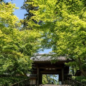 緑に誘われて【円覚寺】総門下の緑があまりにも鮮やかで
