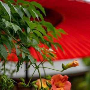 朱と朱で【海蔵寺】ここでの凌霄花の愉しみ方