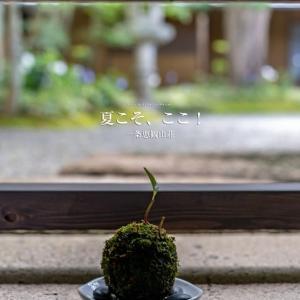 夏こそ、ここ!【一条恵観山荘】暑い鎌倉、ここは少し涼し気です