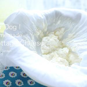 「For Dog !  簡単、ホームメイド カッテージチーズ」