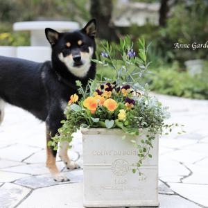 寄せ植えはフラワーアレンジメント風に。愛犬と一緒に庭時間。