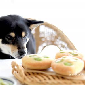 For Dog ! 白神こだま酵母のそら豆のフォカッチャ