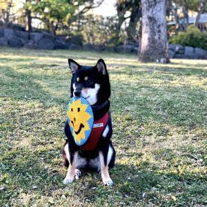 犬のデンタルケアに役立つコットン製のおもちゃ