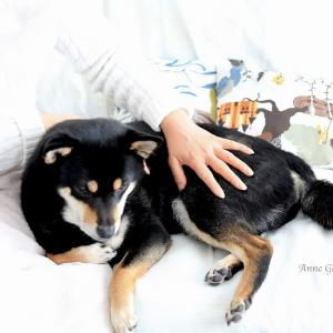 愛犬の長寿の秘訣は、ベタベタ、ぎゅーっのスキンシップ。