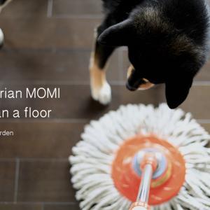 """愛犬のじっとり肉球の足跡。フローリングの水ぶきに""""モミ""""の精油を活用!"""