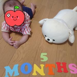 3歳2カ月、やっぱりだめか&驚きの上達ぶり。0歳5カ月、はいはいらしき動き!?