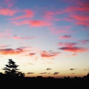 陽があたる前が1番 美しい♡