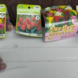 チューリップを植えたり、庭のいろいろ♪