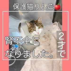 <お願い>保護猫りんごちゃん募金について