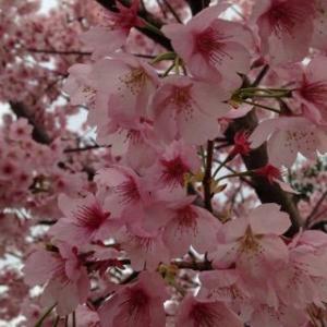花より太鼓 (1)