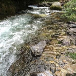 素晴らしい自然の中で流木やレイアウトに使えそうな石を採集