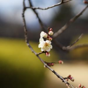 乙女座の満月〜3月地球ヒーリング