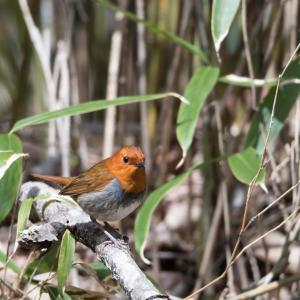 峠の野鳥(1)