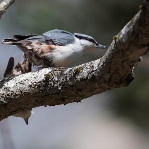峠の野鳥(2)