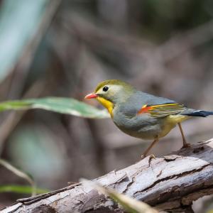 峠の野鳥(3)