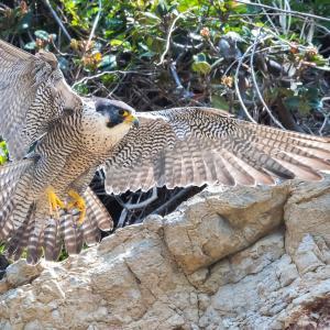 野鳥撮影(D500のAF設定)