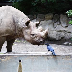 上野動物園へ(8/2/2020)