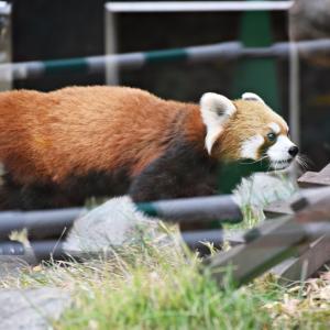 上野動物園へ(11/23/2020)