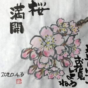 花  絵手紙  桜