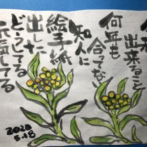 絵手紙   5月の花