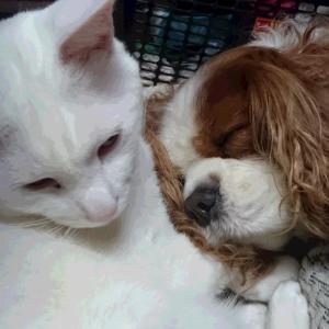 やっぱり猫が好き・・・な犬
