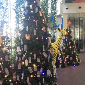 4回目のクリスマス ルッコラの日常 11月27日〜12月2日