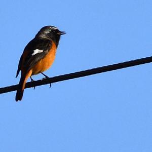 みとろフルーツパークの野鳥 191103