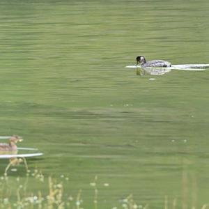 平荘湖の野鳥 191103
