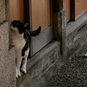 一粒万倍日にして天赦日に猫に出会す