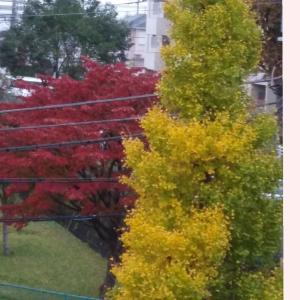 栃木紅葉日光の旅④♪
