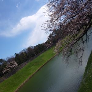 昨日の出来事♪コロナウイルス、千鳥ヶ淵の桜②♪