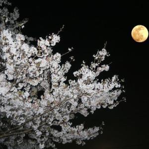 春満月 fu