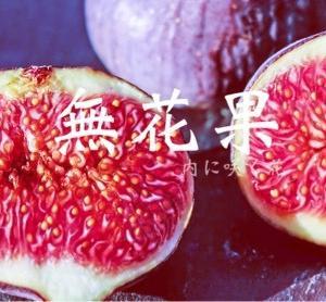 無花果の花は蜜を滴らす  13