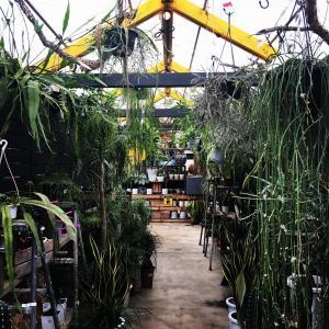 ジャングル化計画の下見。