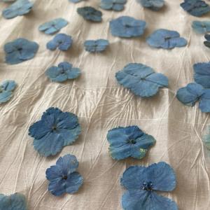 紫陽花の押し花 ♡