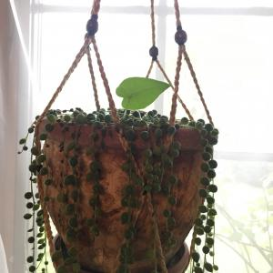 Cocoa家の観葉植物事情。