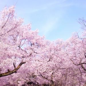 【4/24・石川県金沢市】妊活中の方、おしゃべりしませんか?