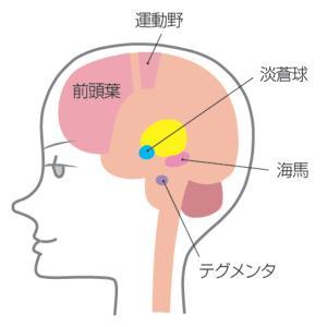 短期記憶を長期記憶にさせるちょっとした方法