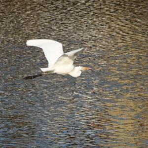 枝川ポタ(その6)/野鳥
