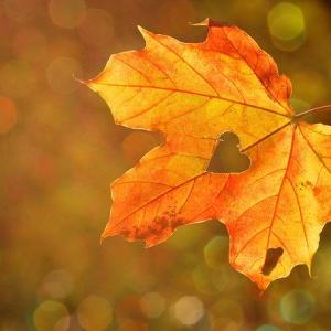 豊穣の女神様よ微笑んで!秋にはじまる新たな恋。~本日の鑑定士~