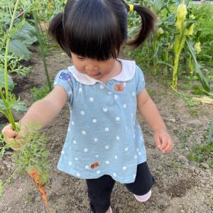 お野菜どうですかー?自分で収穫したら美味しいね!