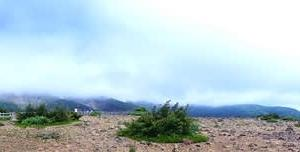 蔵王山へドライブ④~高山植物の女王こまくさの群生地駒草平~