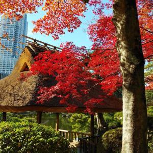 2019~ちょっと旅 広島の旅① 縮景園のもみじ🍁
