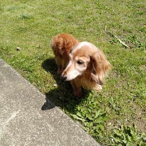 愛犬スミレちゃんの病院代。